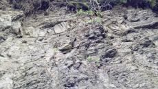 Odkrywka skalna Fliszu Karpackiego