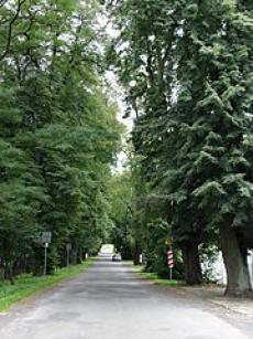 Park Dworski w Wielkich Drogach