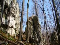 """Rezerwat przyrody """"Pazurek"""""""