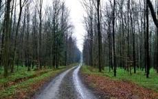 Przyrodniczy szlak Puszczy Sandomierskiej